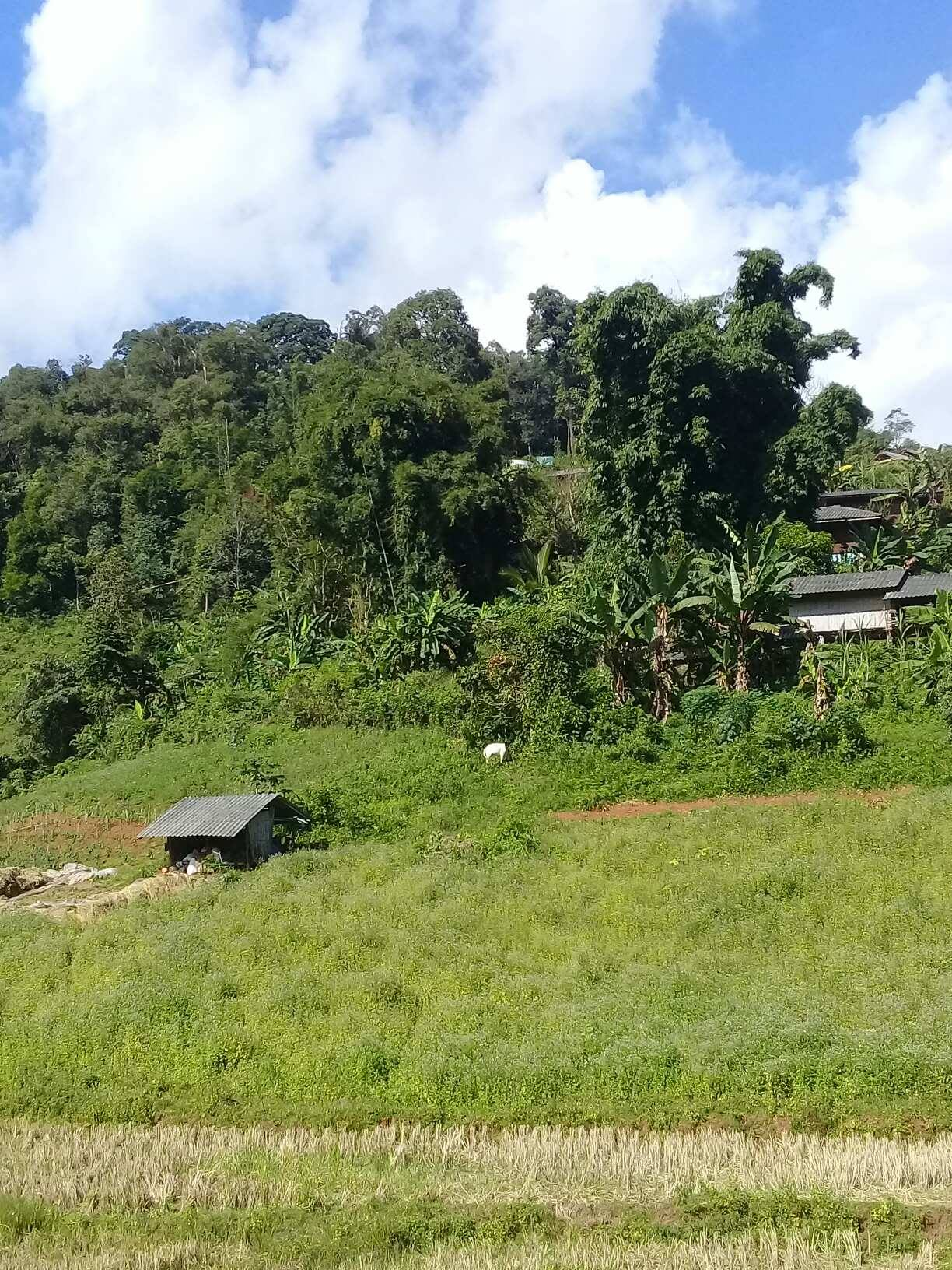 Doi Inthanon Village