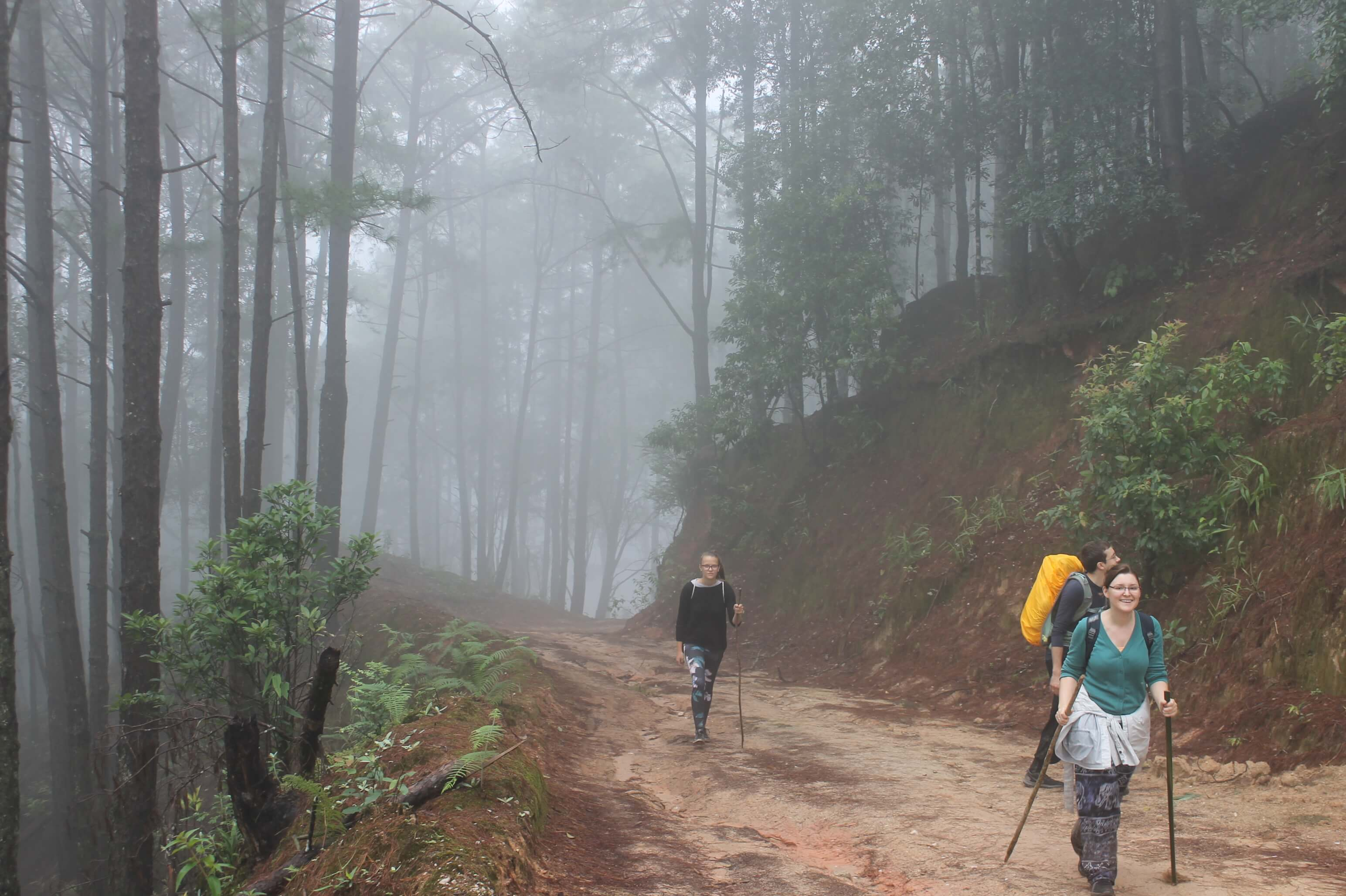 trekking rain forest morning Pha Daeng National Park chiang dao