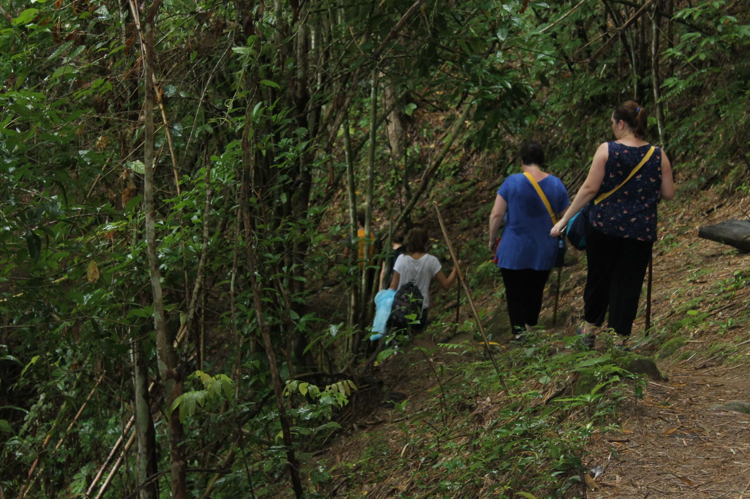 trekking in Pha Daeng National Park