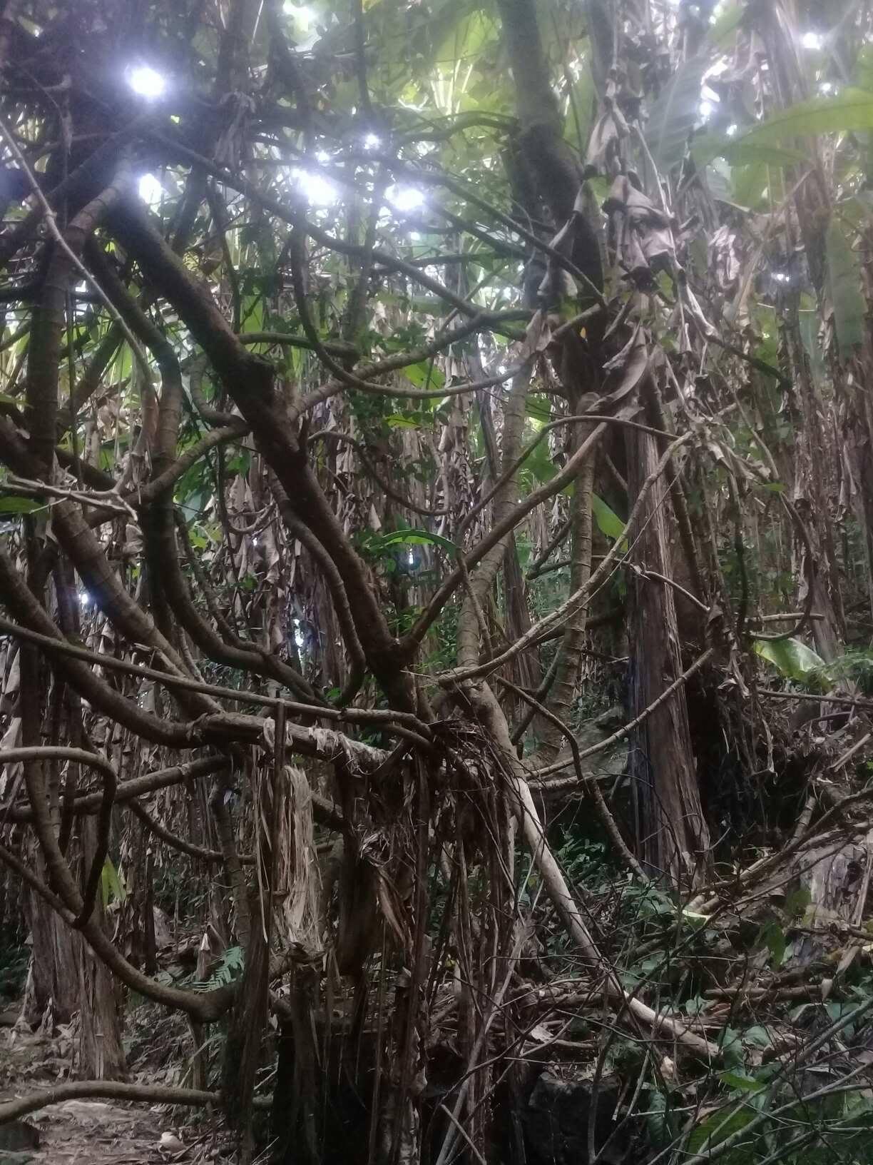 Doi Inthanon Rainforest