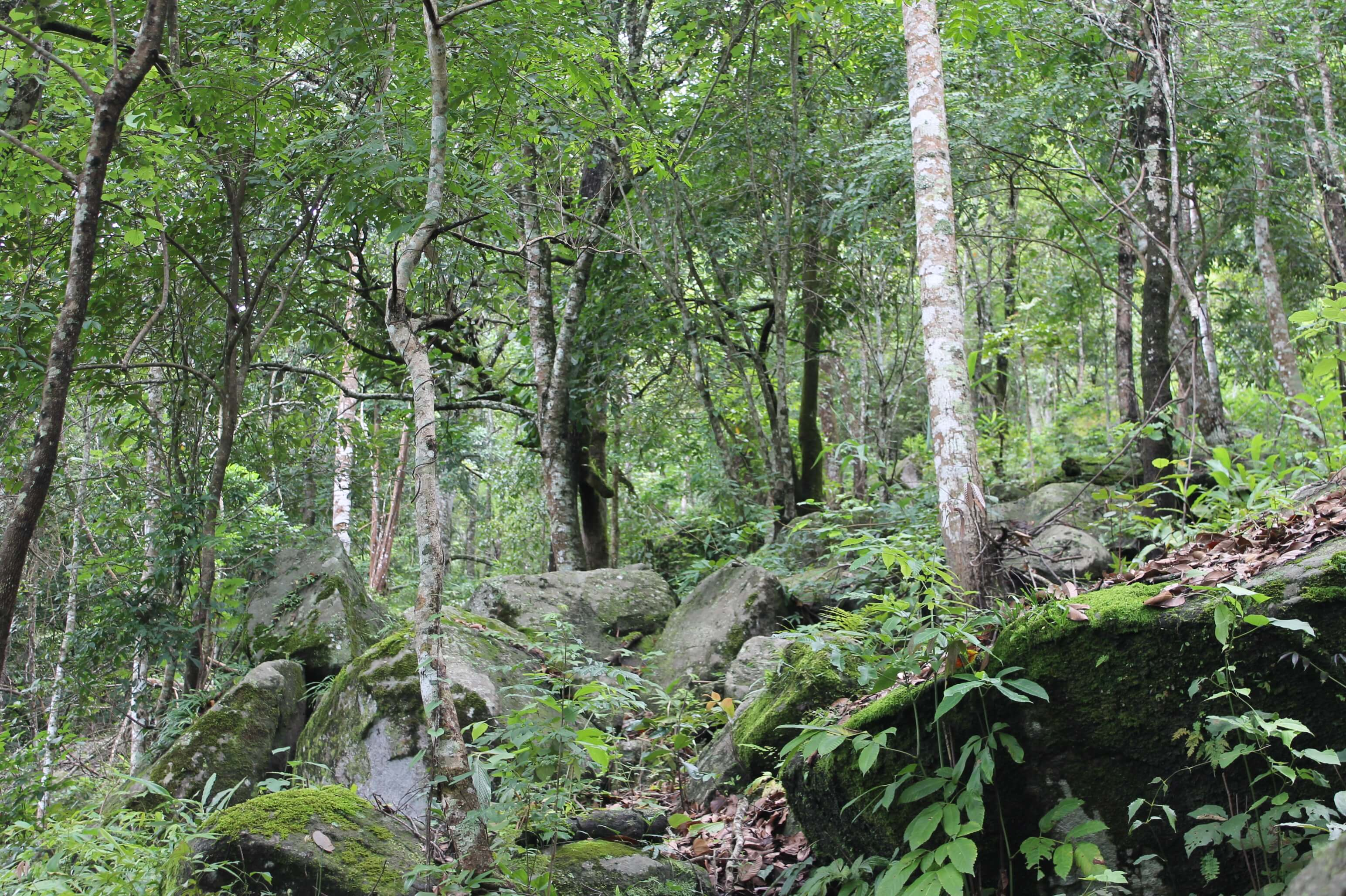 Pha Daeng National Park rain forest