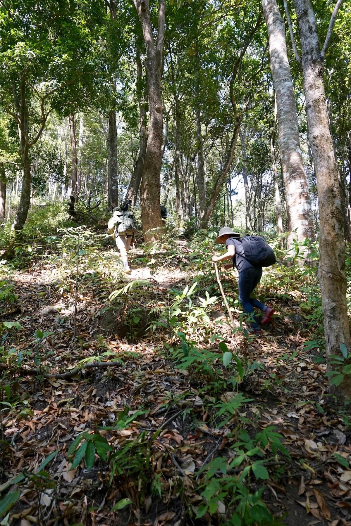 trekking in Doi Inthanon National Park