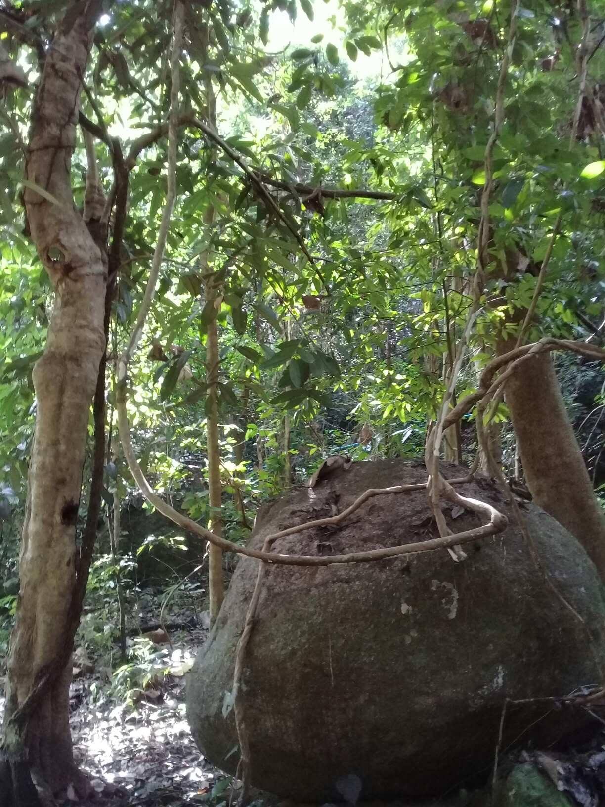 Rainforest in Doi Inthanon