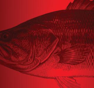 EGO Fishing Retail Partners