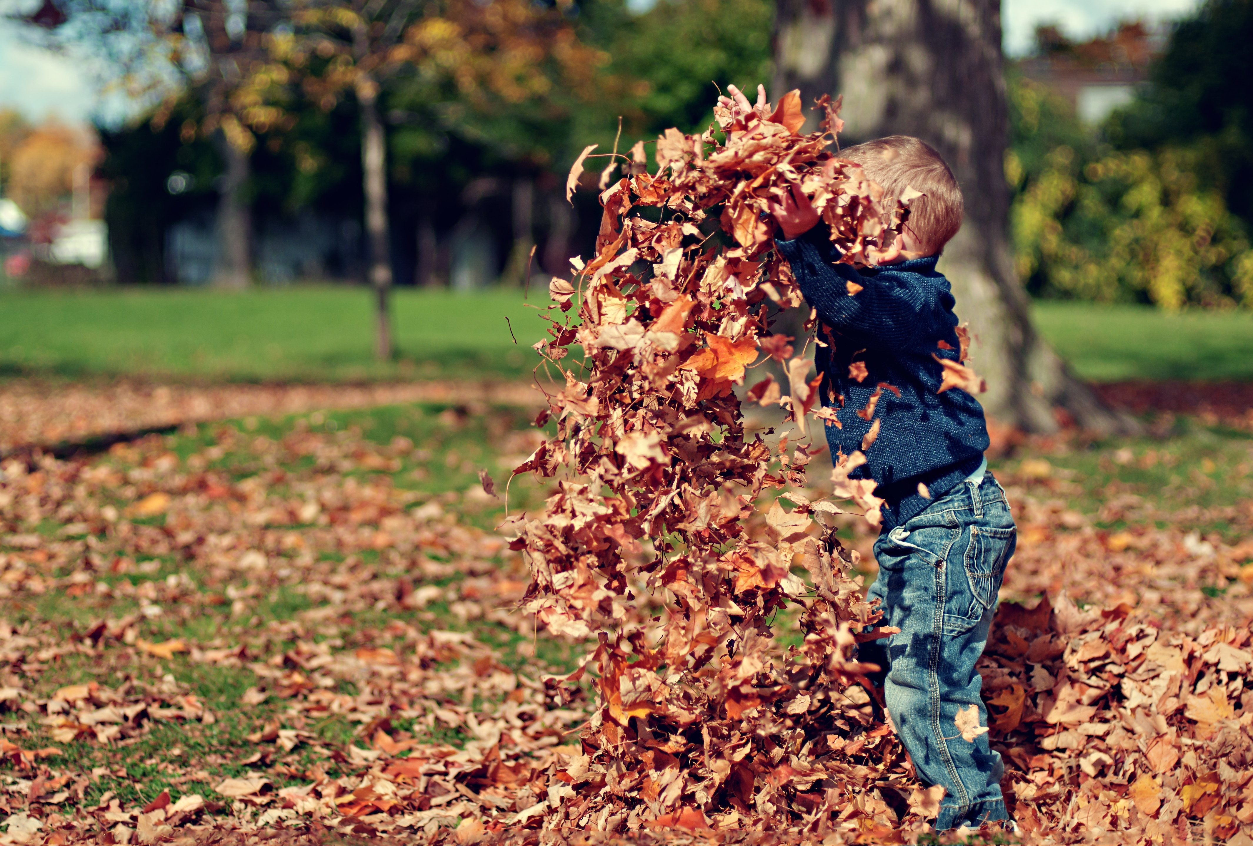 nz-ece-child-in-leaves