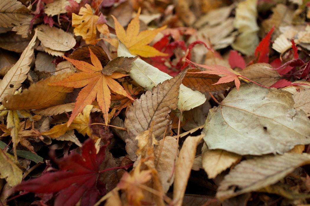 ece relief job nz autumn leaves