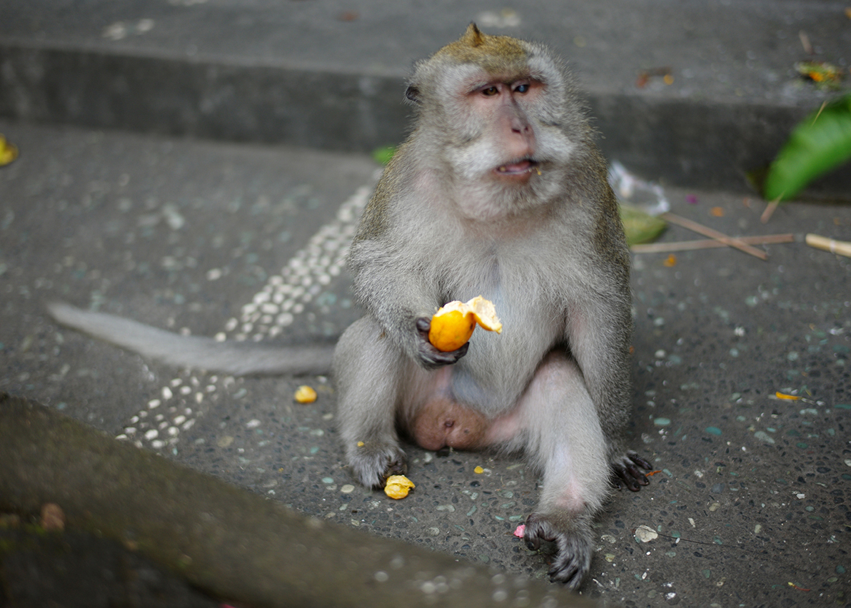 Visit the famouse Monkey Forest.