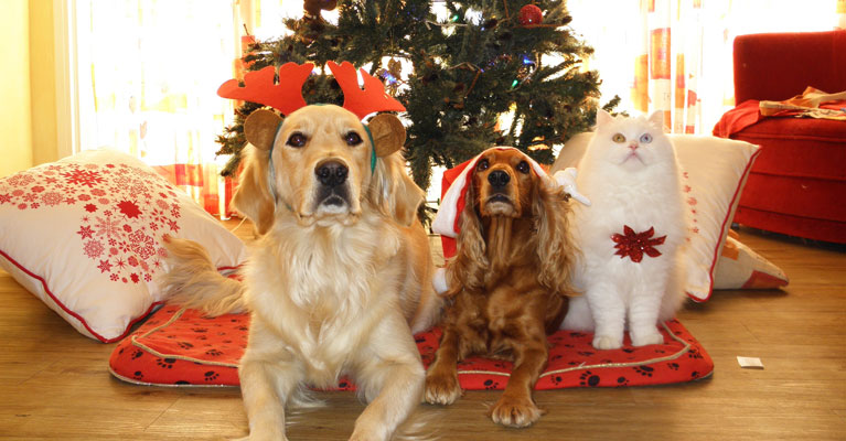 Other Holiday Hazards for Pet