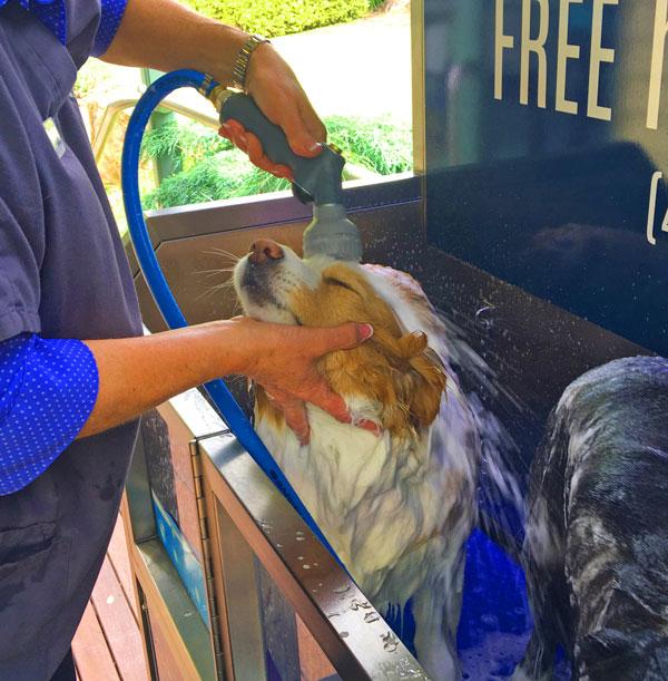 Public Dog Wash