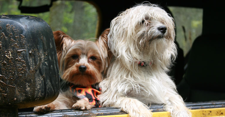 Top Tips for Traveling with your Pet