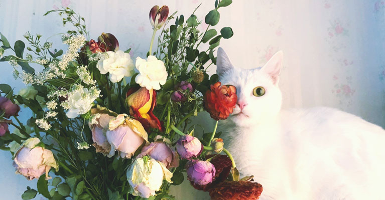 Toxic Flowers