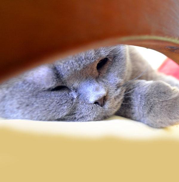Cat Boarding/ Hospice