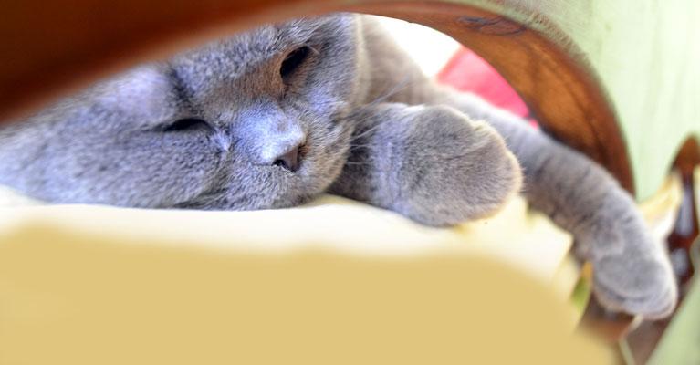 Cat Boarding/Hospice