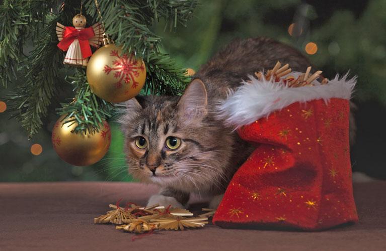 Christmas for Pets