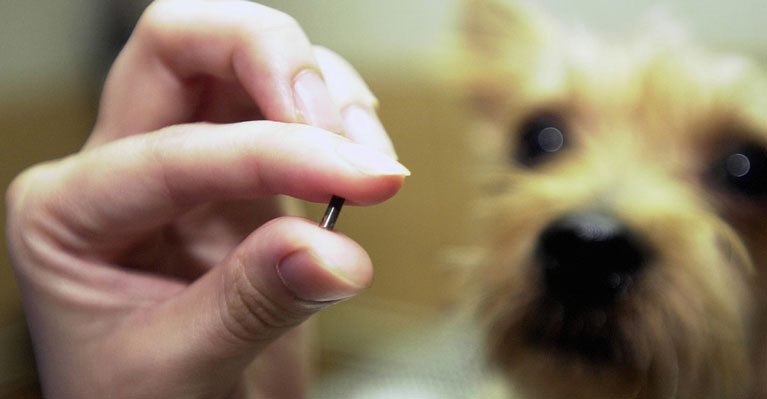 Microchipping