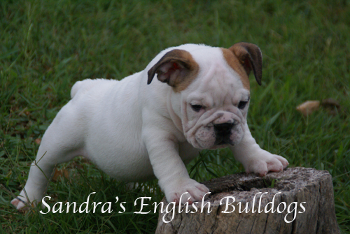 girl pup