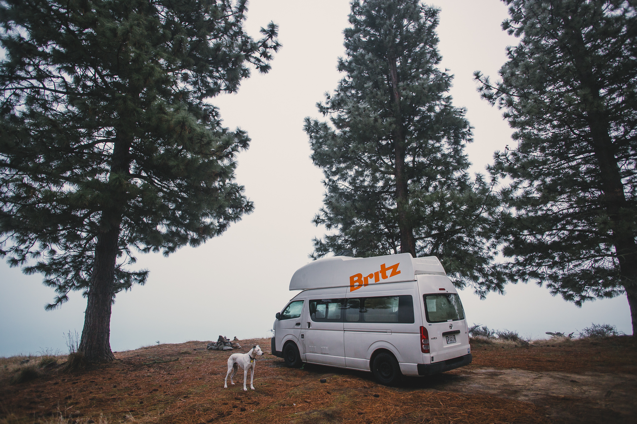 A dog stands outside a campervan on a road trip