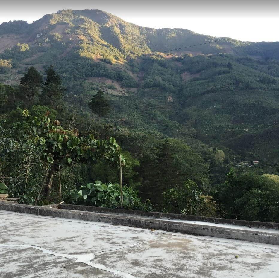 Roast Umber - Guatemala