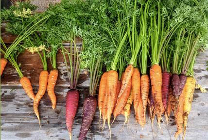 Photo de carrotes