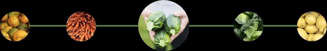 Visuels montrant plusieurs variétés de légumes