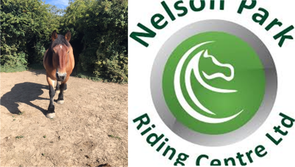 Horse Riding at Nelson Park!