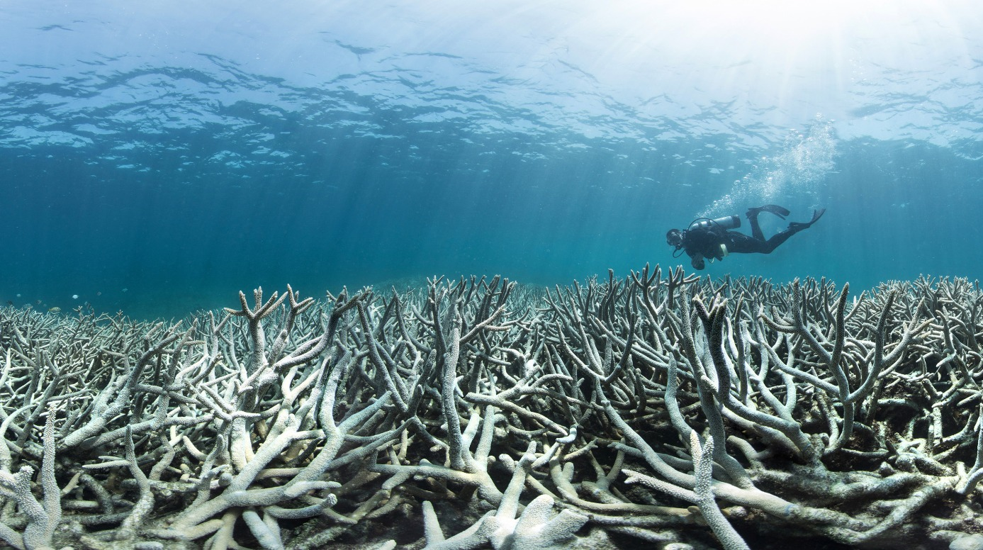 Photo of a bleached coral reef.