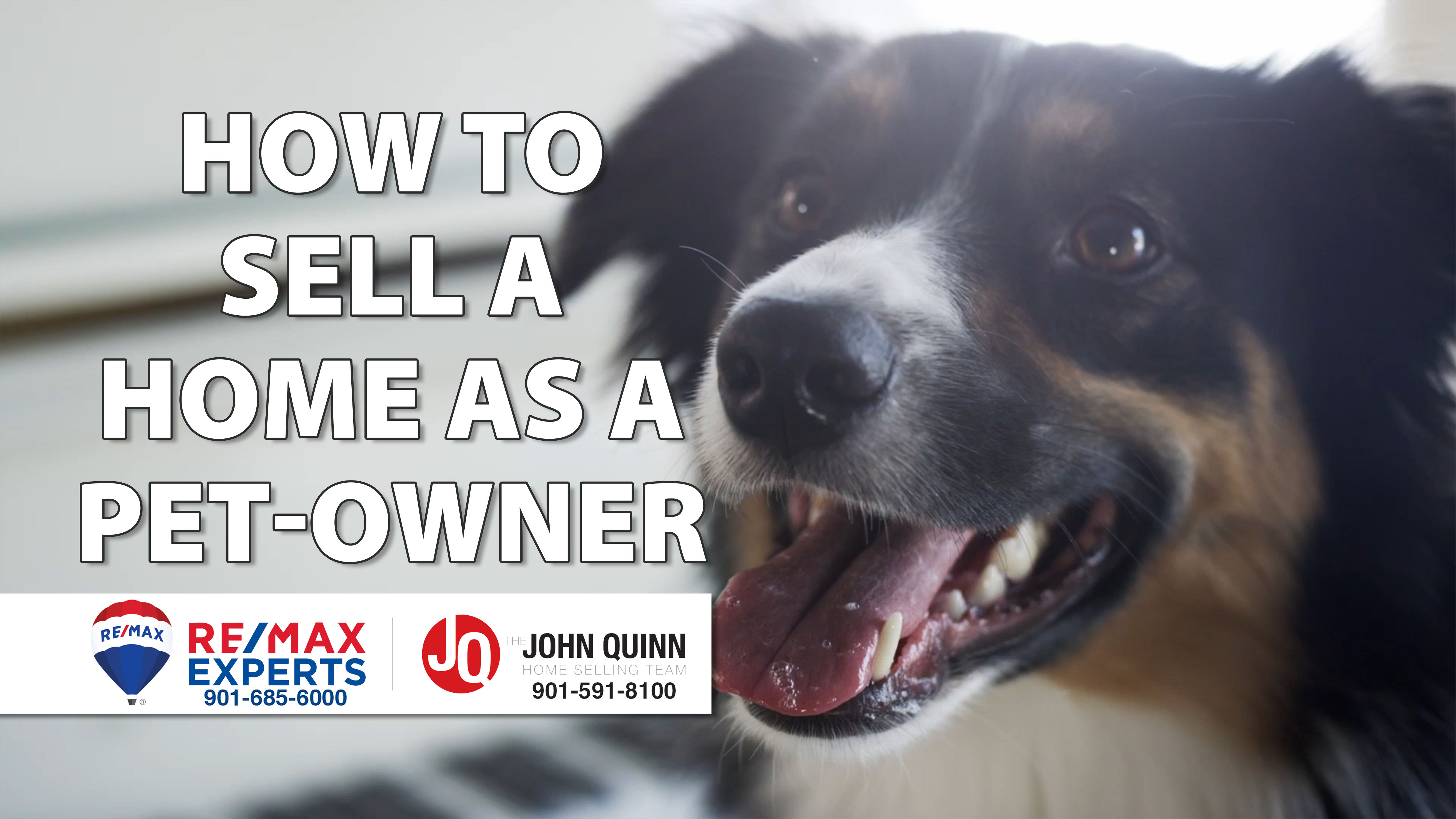 Advice for Home Sellers With Pets
