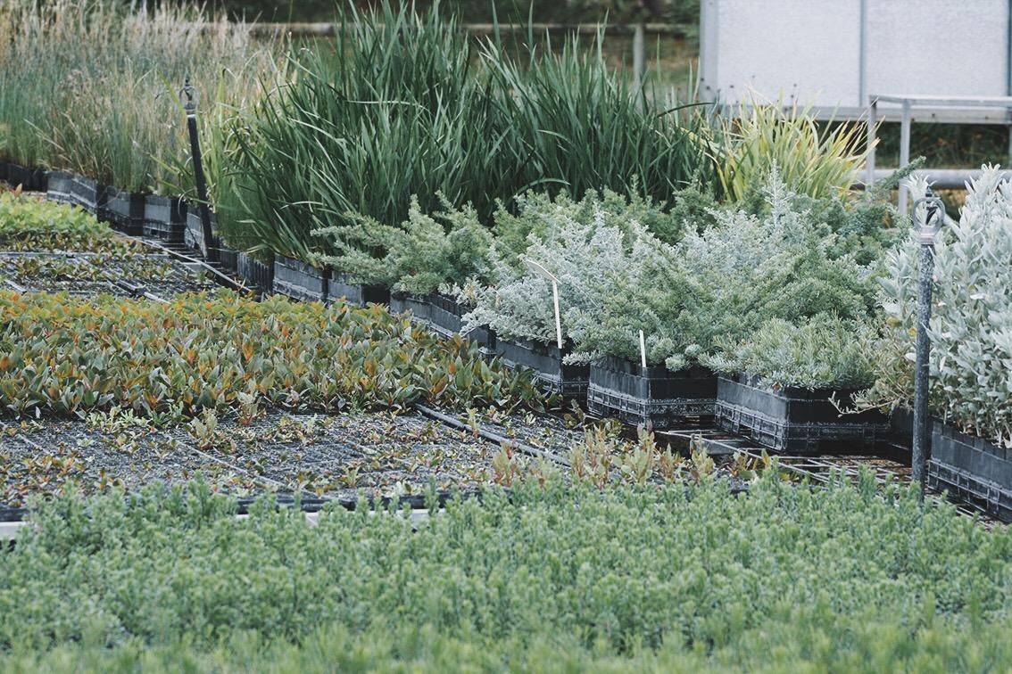 Esperance Farm Trees