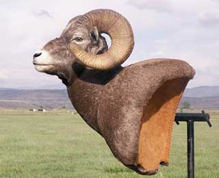 Big Horn Sheep - Kim