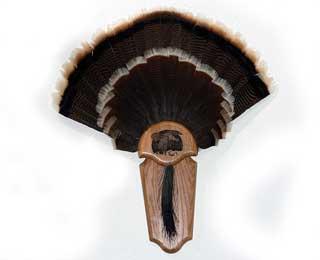 Turkey Tail Fan Plaque