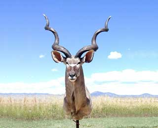 58-inch Greater Kudu - Jim Newman