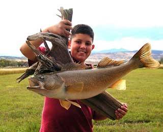 30 plus-inch Local Walleye