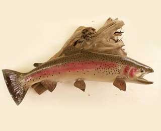 33-inch Wyoming Rainbow repro.