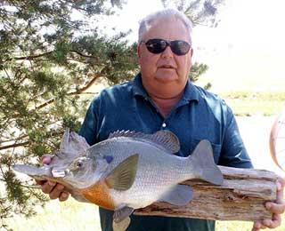 Awesome 15-inch Bluegill - Darrel Bearson