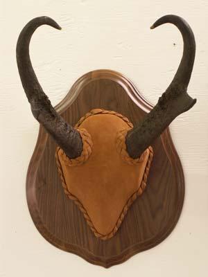 Antelope Horn Plaque