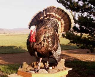 Colorado Turkey - Lou DeAntonio 2005