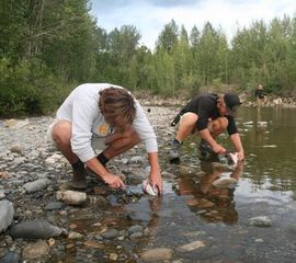 Lachse angeln am Russian River bei Talkeenta in Alaska