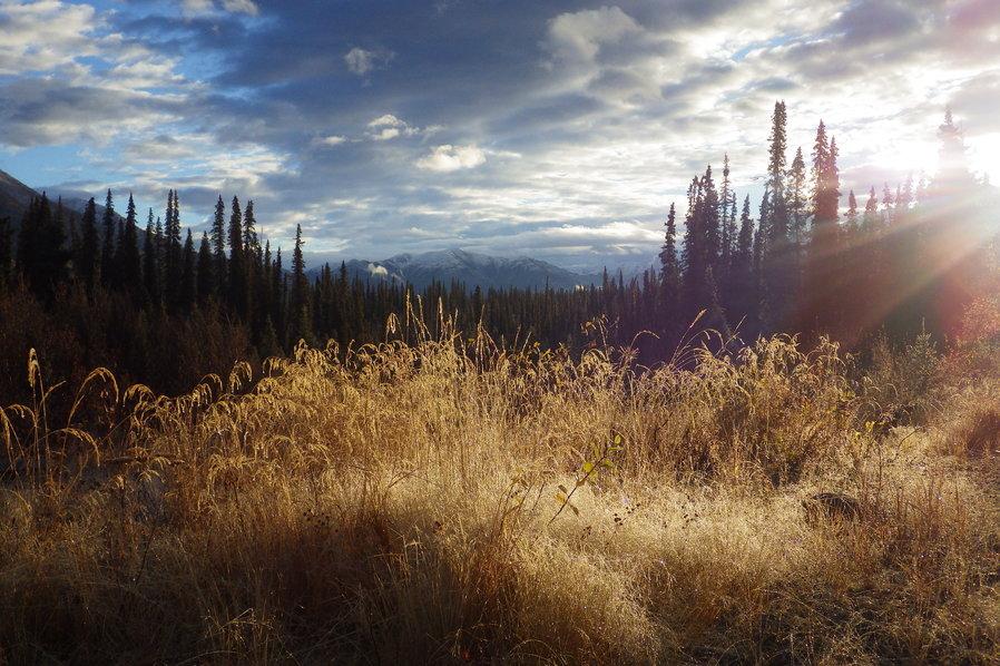 Kim Pasche Alaska Kanada Wildnis Natur
