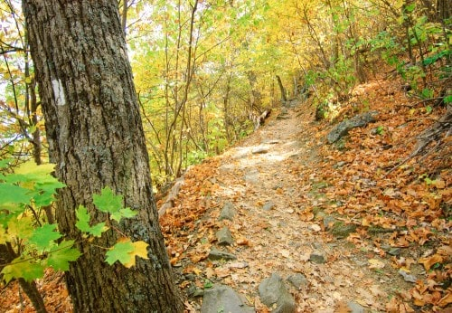 Touchstone Center for Crafts forest path in autumn