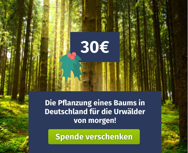 Spende verschenken Green Forest Fund