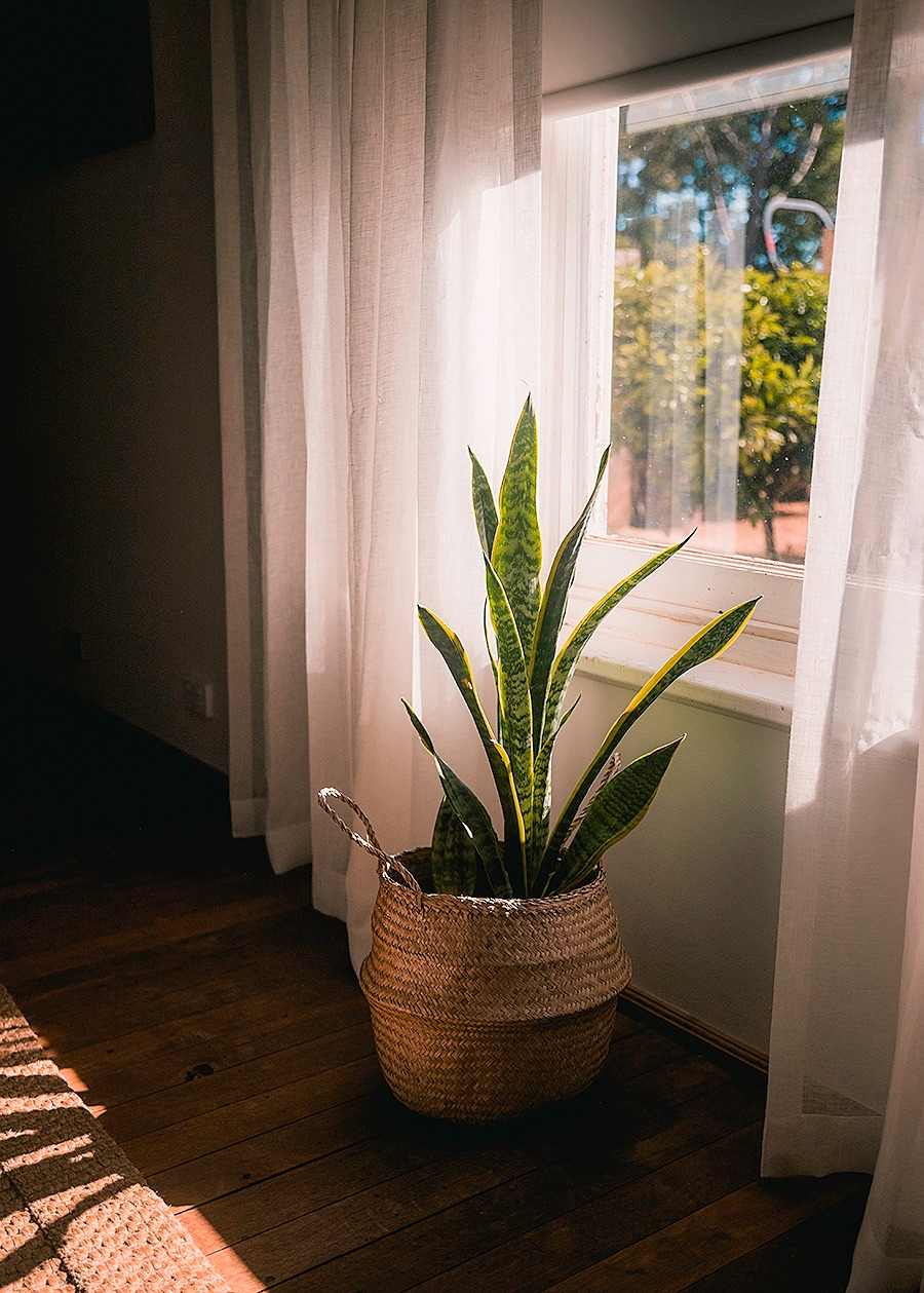 Bedroom Plants Esperance Tide