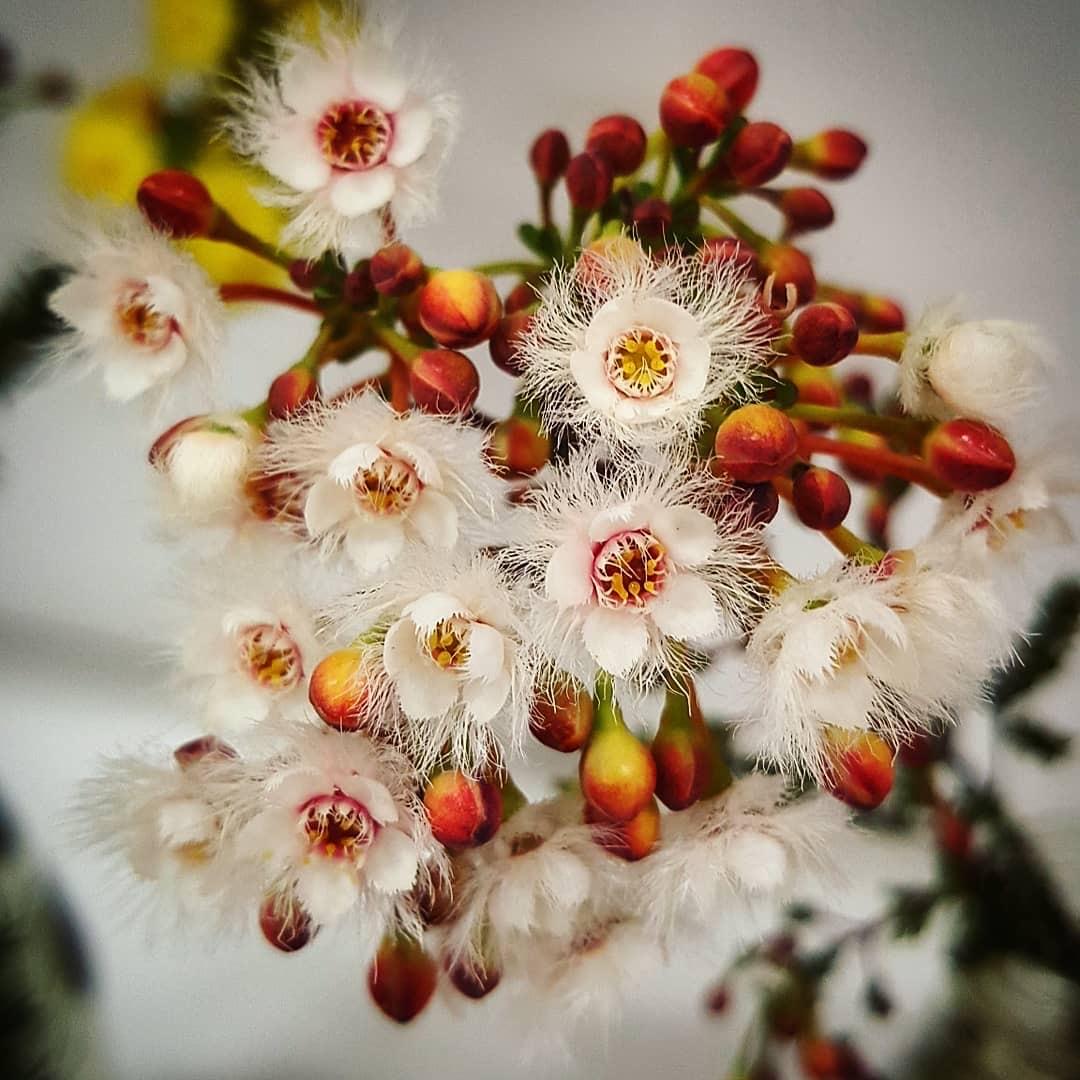 Go Wild: Ravensthorpe Wildflower Show & Spring Festival