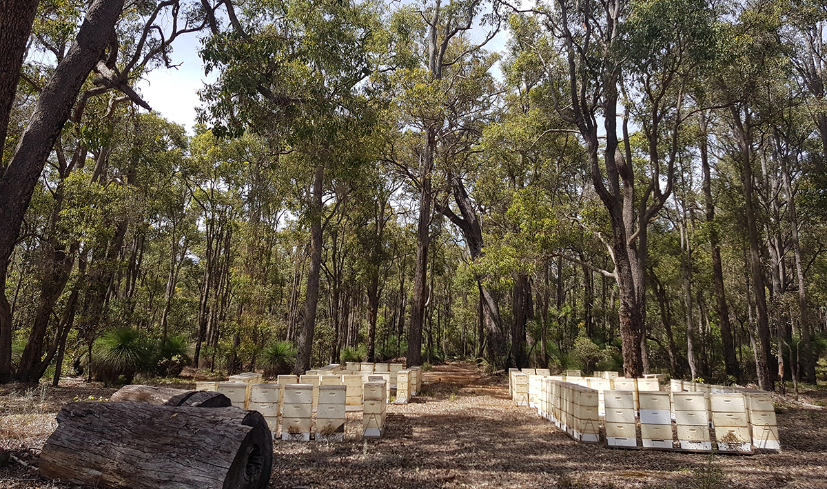 One Hive to Thriving Local Business: Esperance Honey