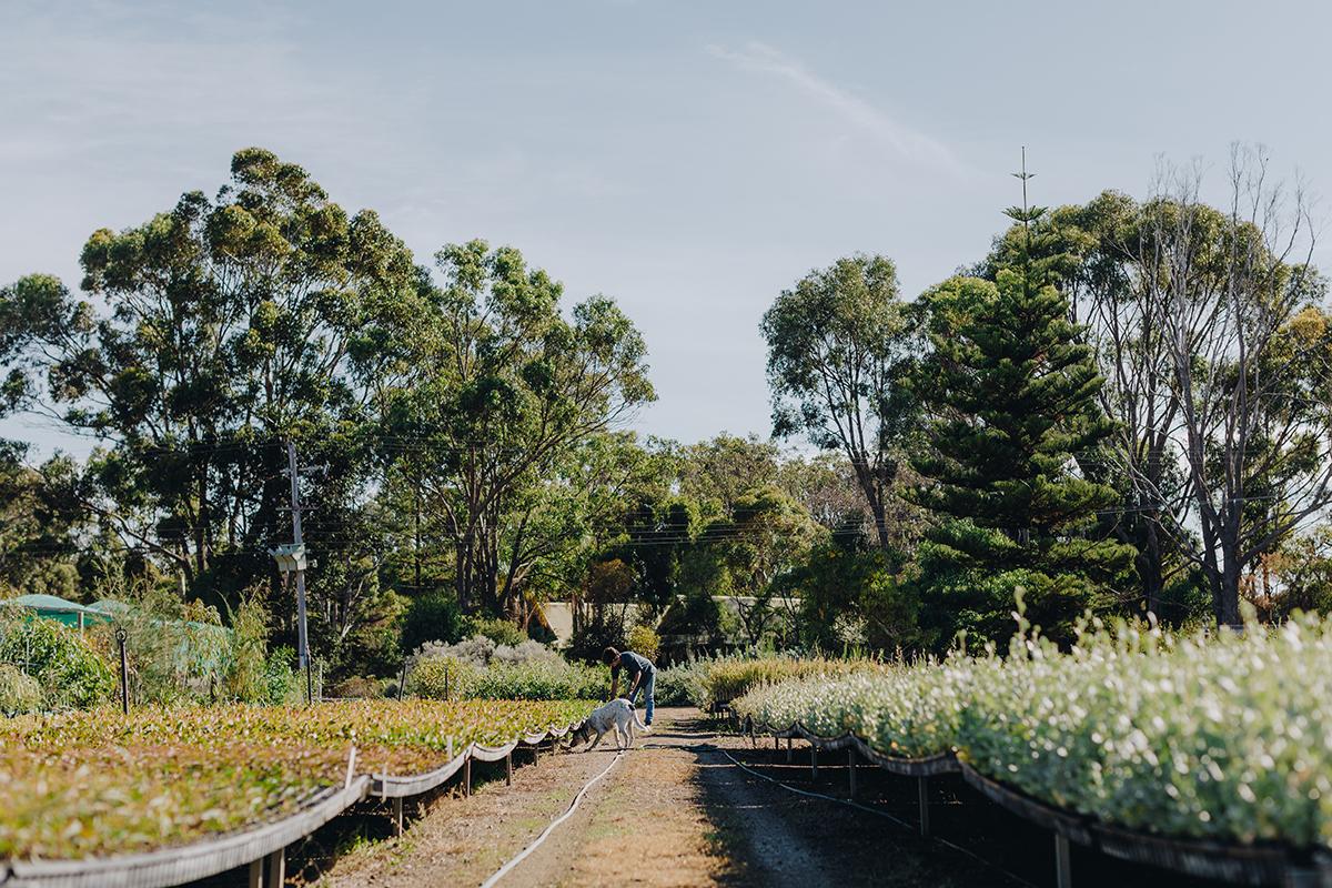 Home Grown: Esperance Farm Trees