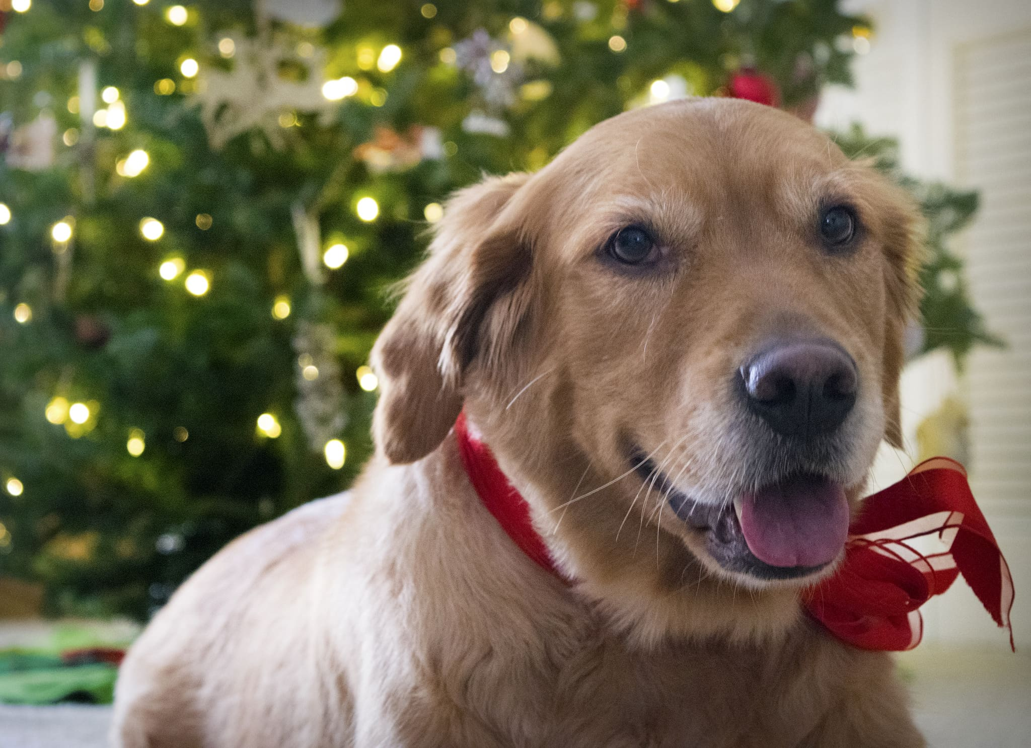 Holiday gift guide for dog owners and lovers 2018