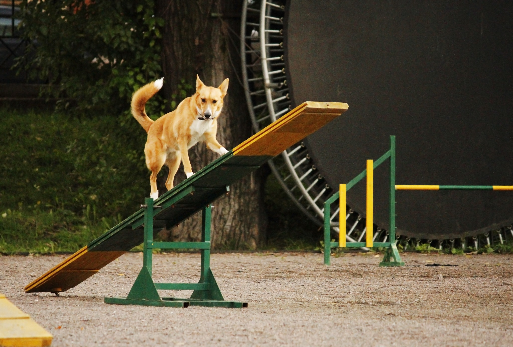 10 Questions to Ask Before Taking a Dog Agility Training Class
