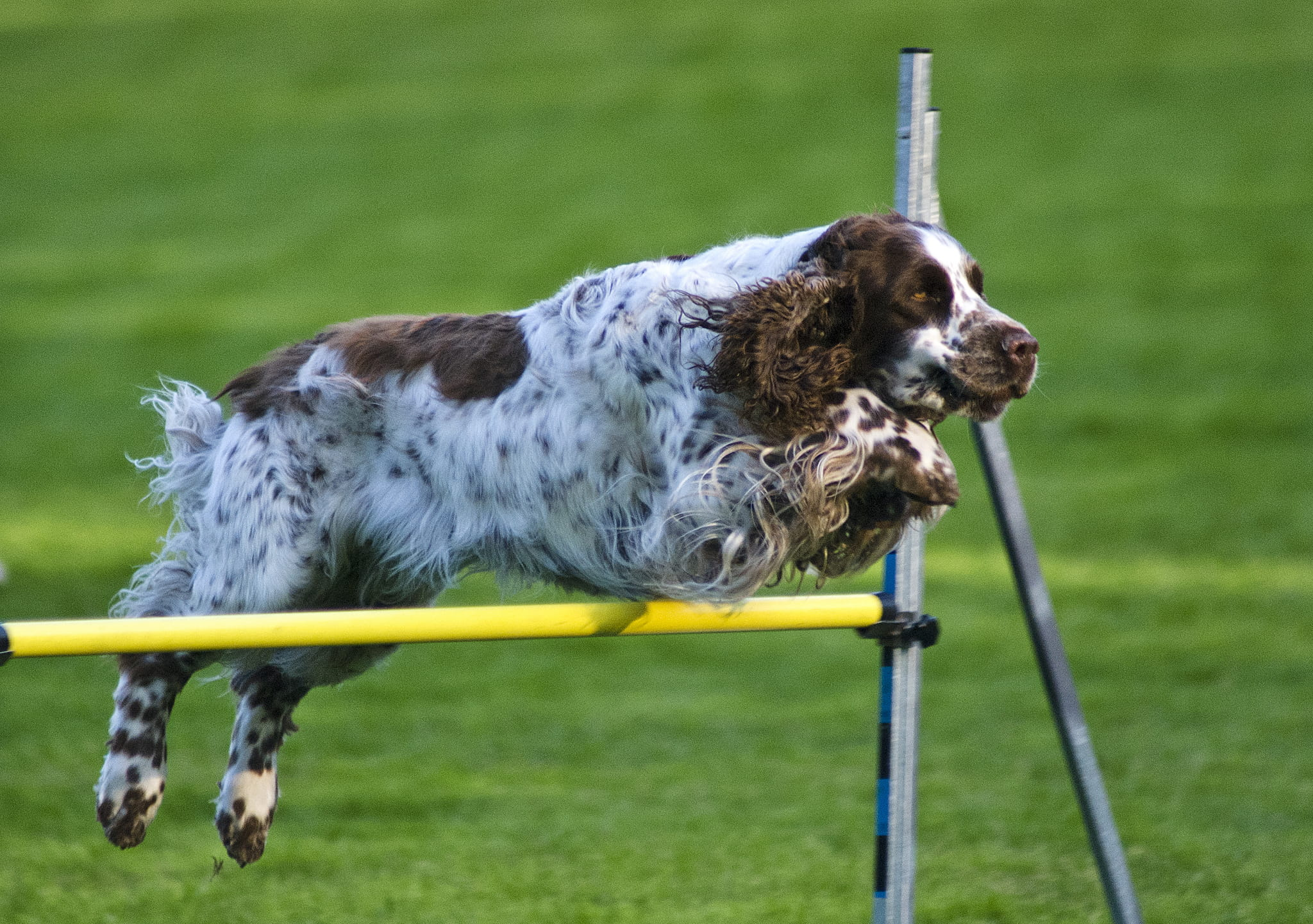 Agility Training for Dogs: Benefits and Starting Tips