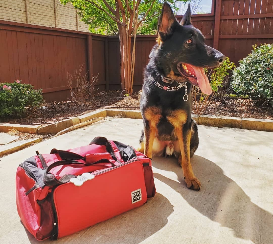 The best dog supplies travel bags for owners on the go