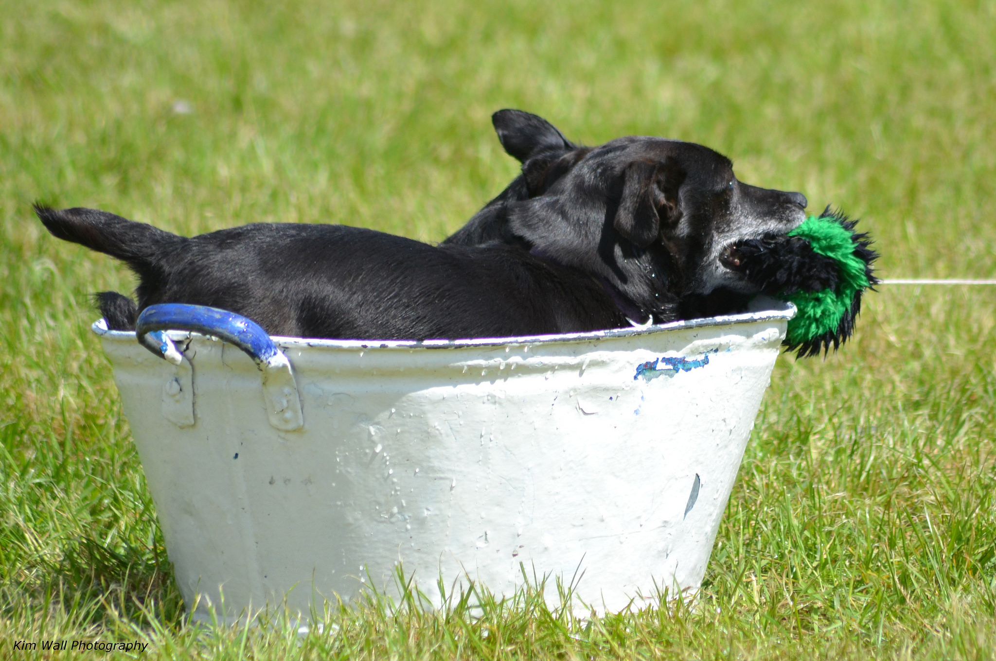 small dog in outdoor tub