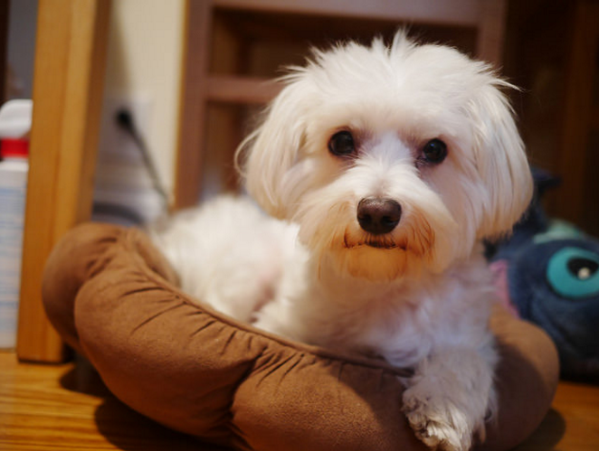 Here's what you need to know about hypoallergenic dogs